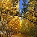 Autumn Secrets by Guido Montanes Castillo