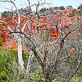 Sedona Arizona Dead Tree by Gregory Dyer