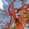 Sedona Arizona Ghost Tree by Gregory Dyer