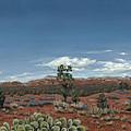 Sedona Cactus Az by Edward Williams