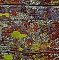 Sedona Carpet by Mae Wertz