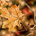 Sedona Leaf 14 by Marianne Donahoe