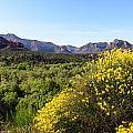 Sedona Yellow Flowers by John Johnson