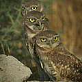 See No Evil - Hear No Evil - Speak No Evil by Leslie Reagan -  Joy To The Wild Photos