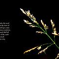 Seed by Debbie Nobile