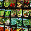 Seed Packets by Judi Bagwell