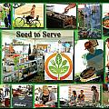 Seed To Serve Rw2k14 by PJQandFriends Photography