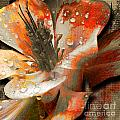 Seeds by Yanni Theodorou