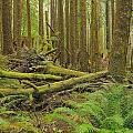 Seeing Forest Through The Trees by Jim Southwell