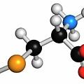 Selenocysteine Amino Acid Molecule by Molekuul/science Photo Library