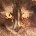 Selini The Siberian by Ageliki