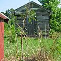 Selma Shed by Bonnie Clark Weatherford