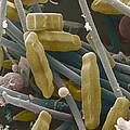Sem Of Diatoms And Blue-green Algae by Power And Syred