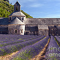 Senanque Abbey by Bob Phillips