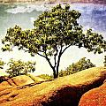 Sentinal Tree by Marty Koch