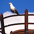 Sentinel Sea Gull by Joy Hardee