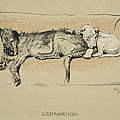Separation, 1930, 1st Edition by Cecil Charles Windsor Aldin