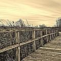 Sepia Boardwalk by Daniel Thompson