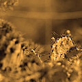 Sepia Cacti Close Up by Deprise Brescia