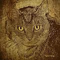 Sepia Cat by Marlene Watson