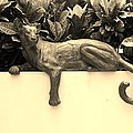 Sepia Cat by Rob Hans