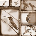 Sepia Hummingbird Collage by Carol Groenen