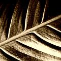 Sepia Leaf by Tina Meador