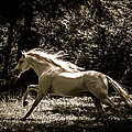 Sepia Stallion by Wes and Dotty Weber