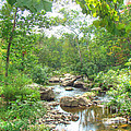 September Arrives At The Unami Creek by Mother Nature