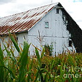 September Corn Barn by Paddy Shaffer