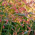 September Grasses by Kathy Barney