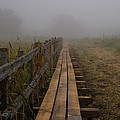 September Mist Hdr - Foggy Day Over Walk Way by Leif Sohlman