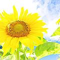September Sun by Melissa Looman