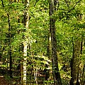 September's Woodlands by Maria Urso