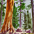 Sequoia Park - California Sketchbook Project  by Irina Sztukowski