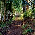 Serene Garden Path by Jeanette C Landstrom