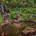 Serene Garden Pond by Jonah Anderson