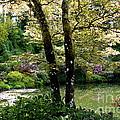 Serene Garden Retreat by Carol Groenen