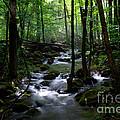 Serene Greenbrier Area Stream  by Nancy Mueller