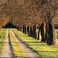 Serene Lane by Sharon Horn