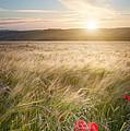 Serene by Matthew Gibson