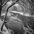 Serene Winter Stream by Paul Schreiber