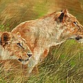 Serengeti Sisters by David Stribbling