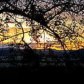 Serengeti Sunset by Tony Murtagh