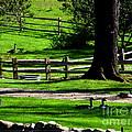 Serenity At Tashmoo Farm by CapeScapes Fine Art Photography