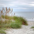 Serenity Beach In Color by Kathy Baccari