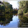 Serenity Pond Reflection At Limehouse Ontario by Lingfai Leung
