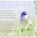 Serenity Prayer by Holly Kempe