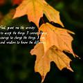 Serenity Prayer by Paul Pecora