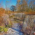 Serenity Trail.... by Nina Stavlund